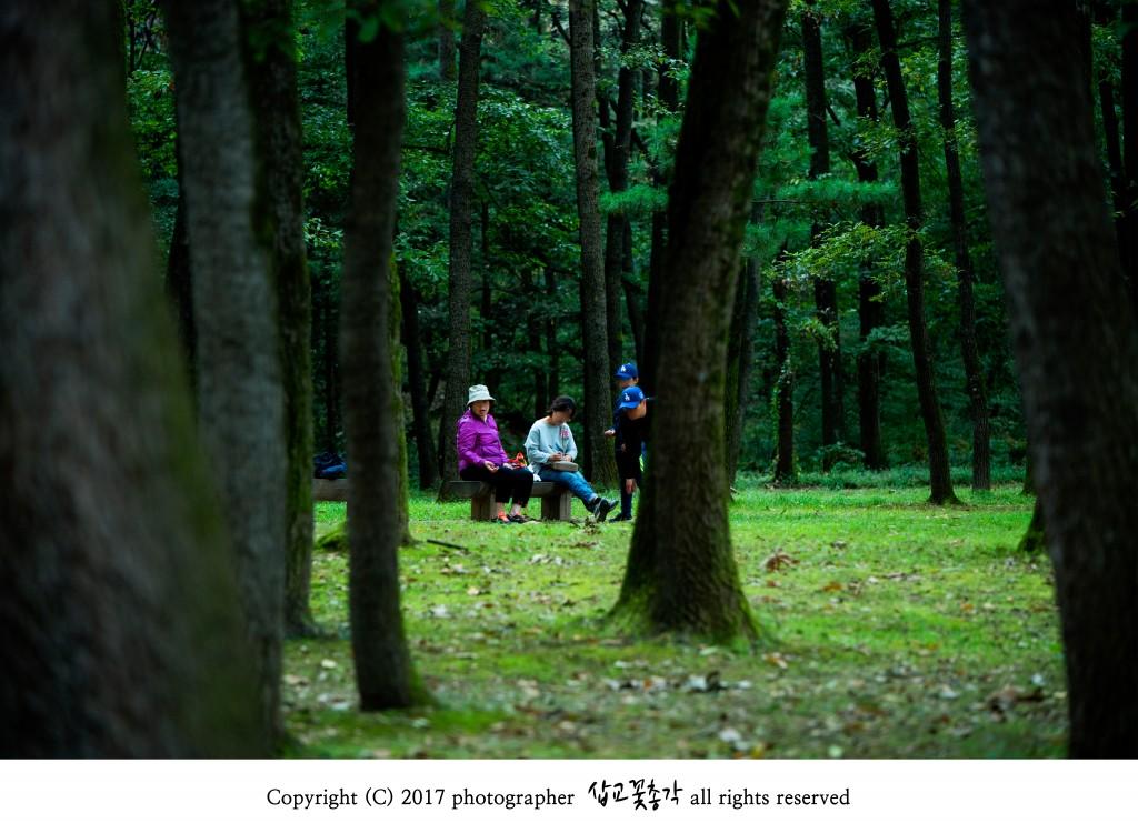 융건릉_숲