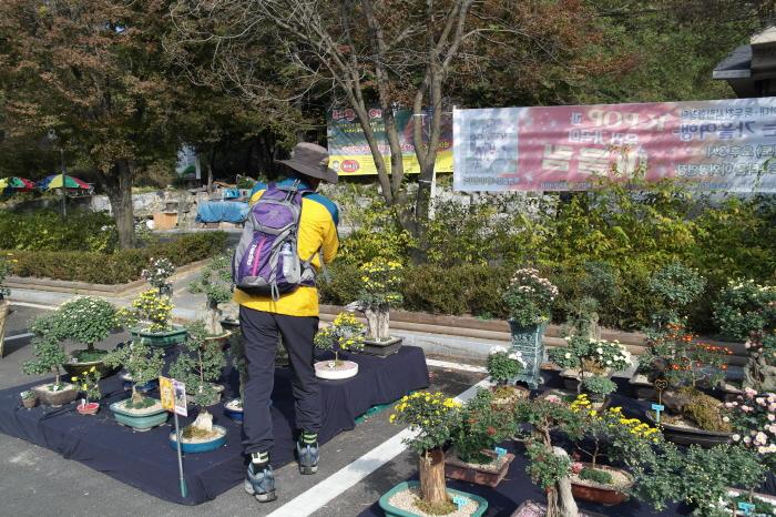동두천 소요산 국화전시회