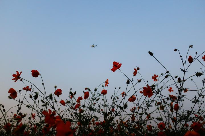 하늘과 코스모스