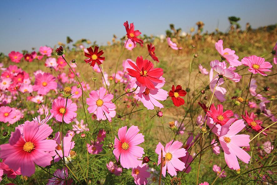 시흥연꽃테마파크