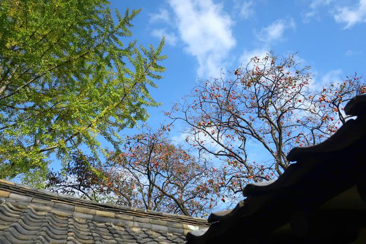 고택의 가을