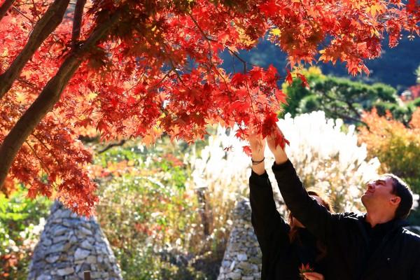 가을여행주간 가평 가볼만한곳 아침고요수목원 가을 단풍, 국화 전시회