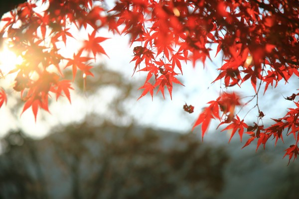 경기도 양평여행-용문사 은행나무와 용문산단풍