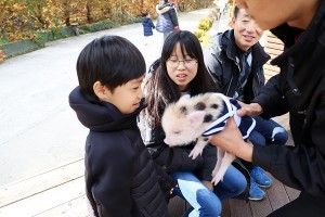 경기도 이색박물관 돼지보러오면돼지 돼지박물관