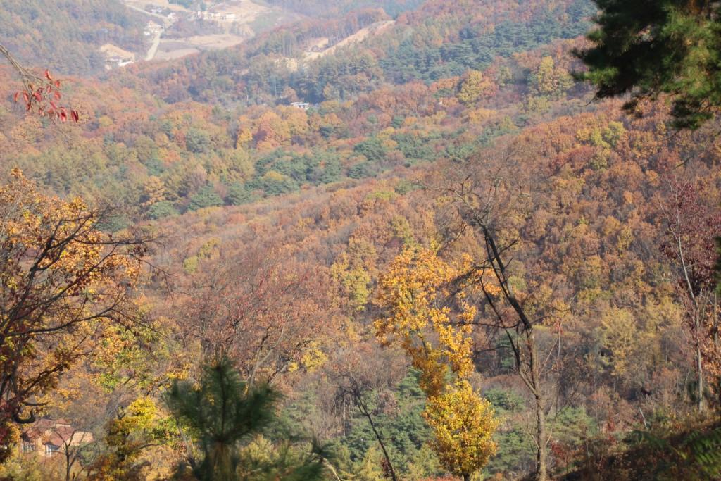 d양평레일바이크,남한산성,오르다온,구둔역,두메향기 030