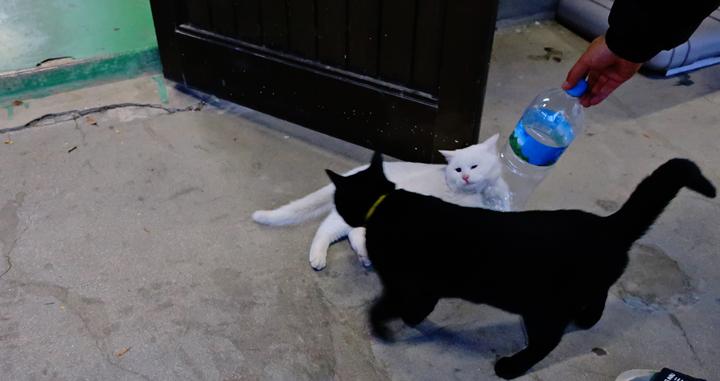 구둔역 고양이