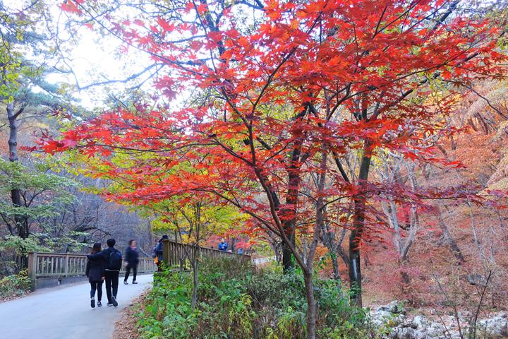 용문사 가는 길의 가을 풍경