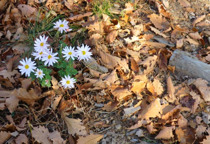 걷다가 만난 꽃