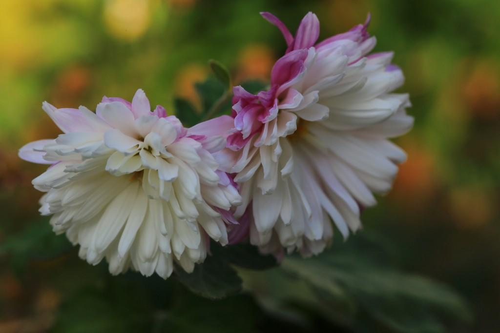 식물원 (47)