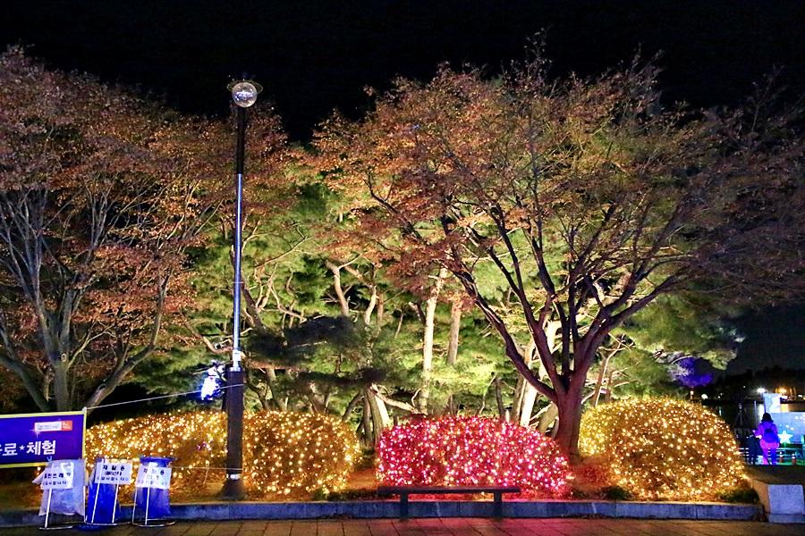 호수꽃빛축제 야경