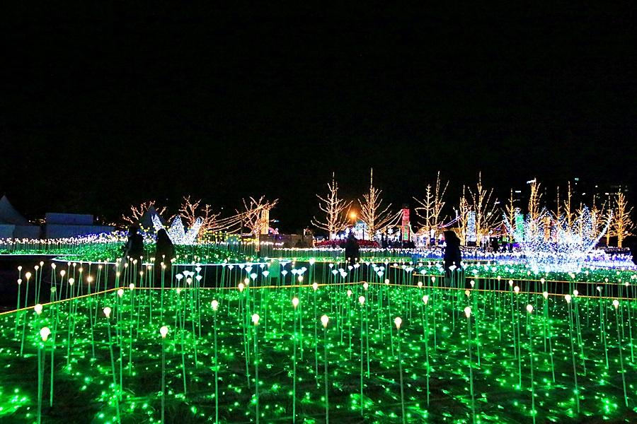 불빛이 가득한 공원