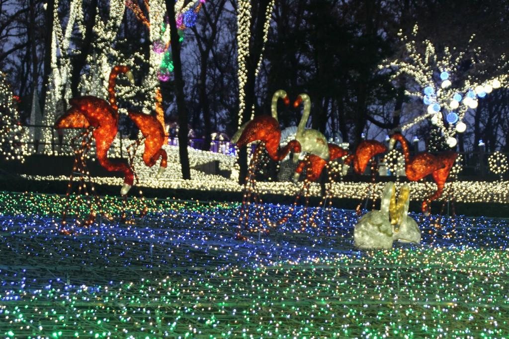 c청연통장,안산별빛축제 173