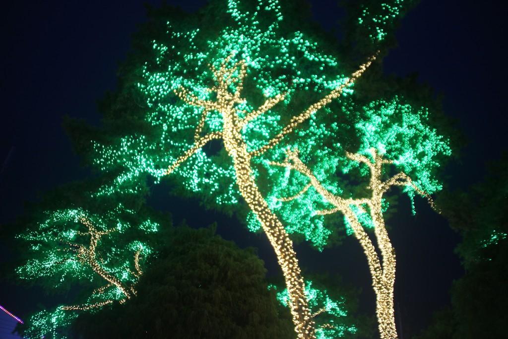 c청연통장,안산별빛축제 264