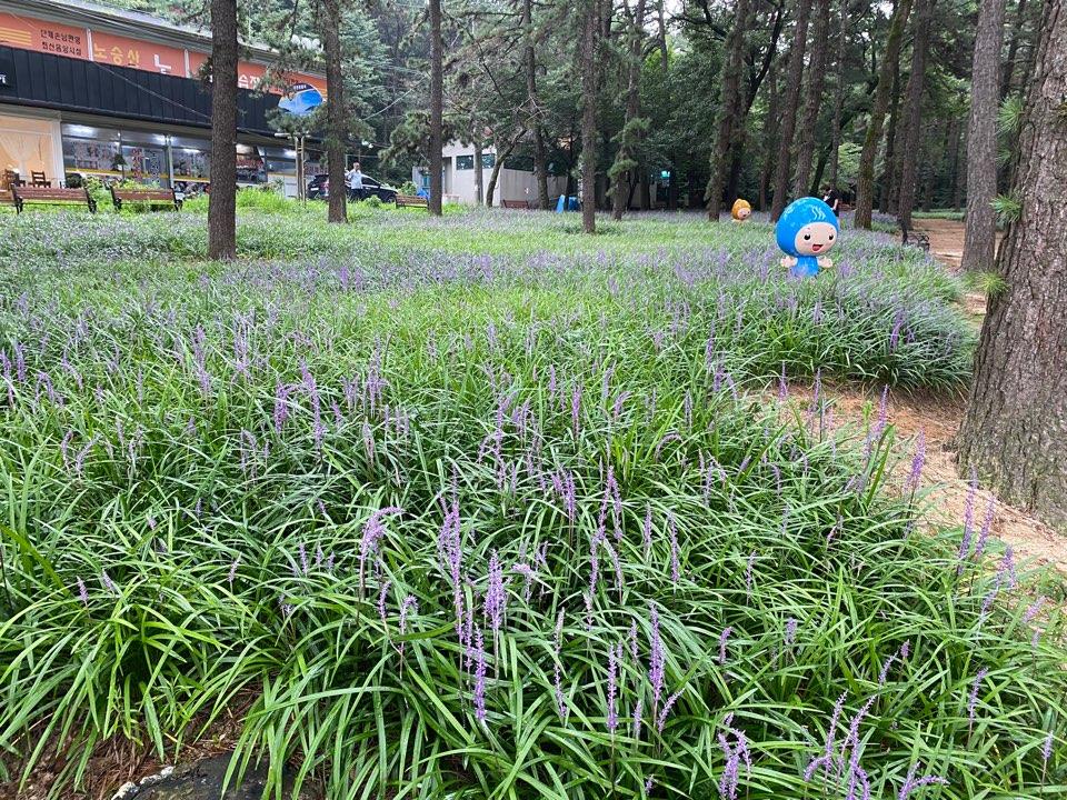 노승산(노성산)시민공원 관련사진