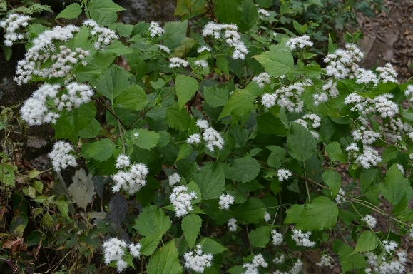 하얀 꽃의 모습