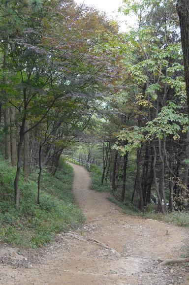 산책로의 모습