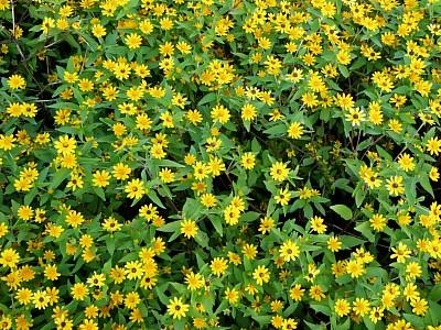노란꽃들이 모여있는 모습