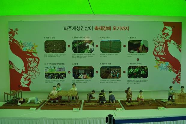 파주개성인삼이 축제장에 오기까지의 과정 사진과 모형