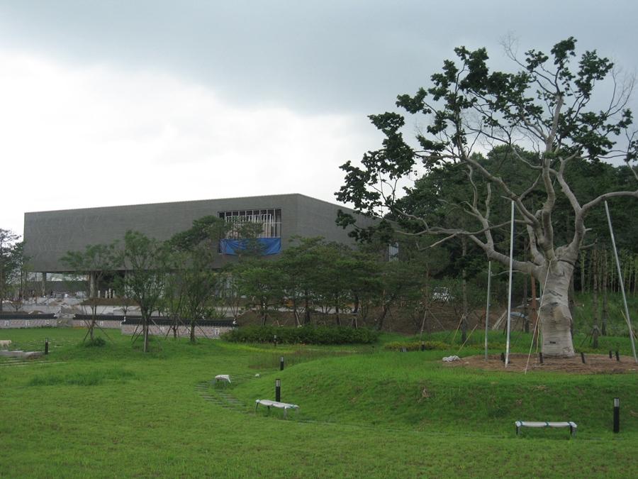 역사박물관 오른쪽에 위치한 느티나무