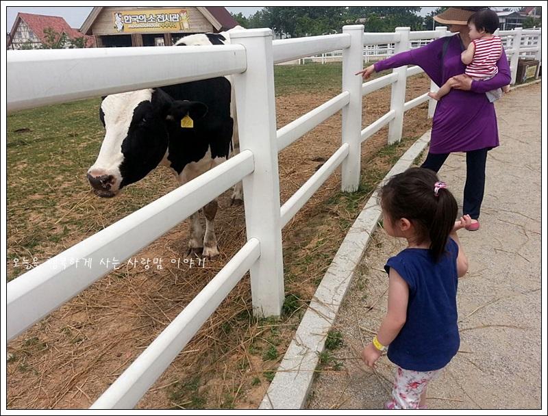 젖소를 보고있는 아이들