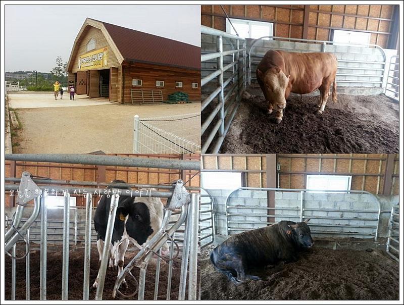 소전시관 내부에 있는 소들의 모습
