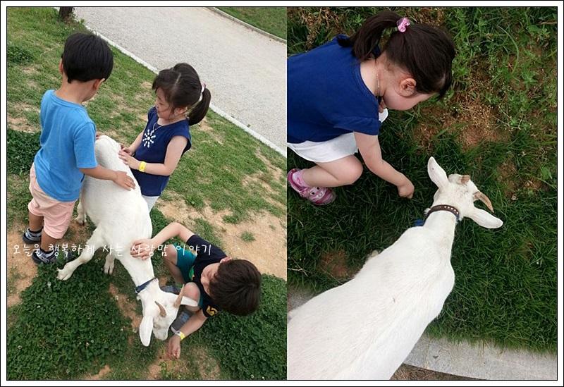(왼쪽)염소를 이리저리 살펴보는 아이들의 모습 (오른쪽)염소와 아이의 뒷모습