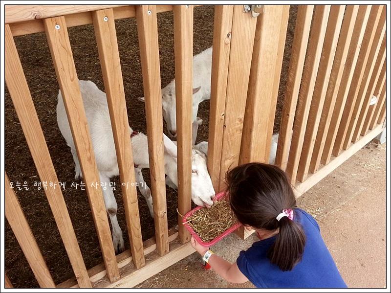 가축들에게 먹이를 주는 아이의 모습