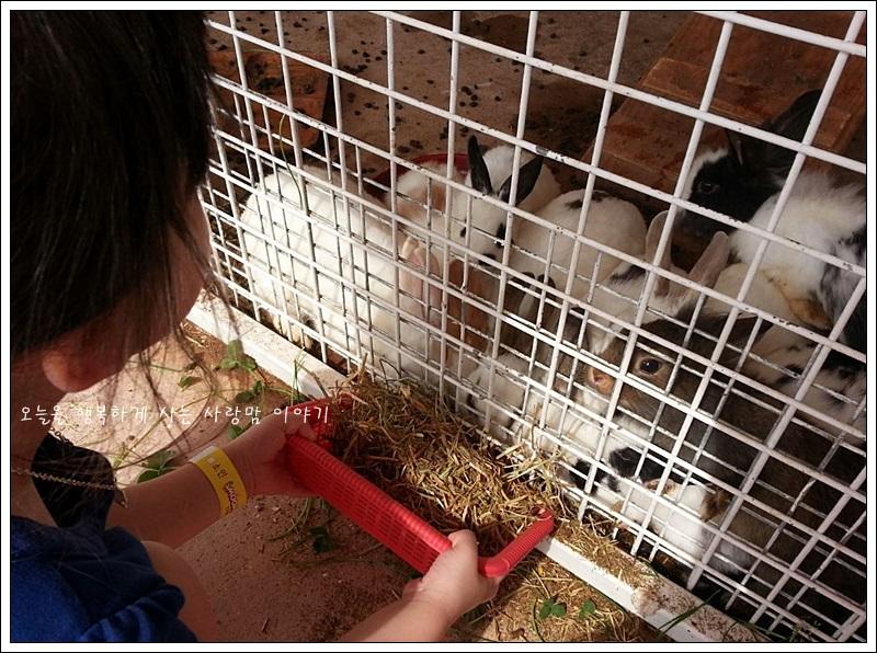 먹이를 받아먹는 토끼들