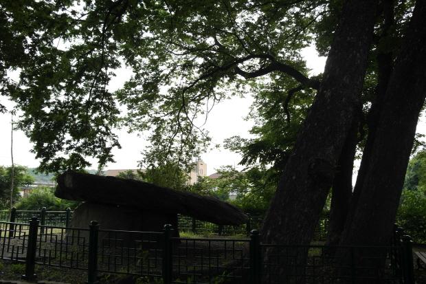 울타리안에 있는 고인돌과 그 위를 감싸고 있는 나무의 모습