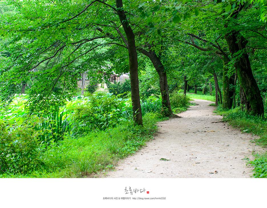푸른 잎이 무성하게 자란 산책로