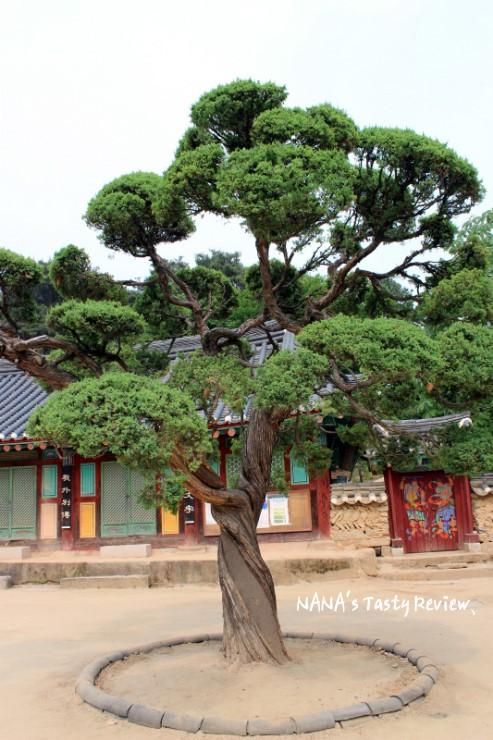 신륵사 내부에 나무