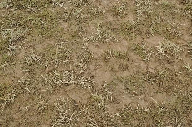 뻘밭같은 잔디밭의 모습