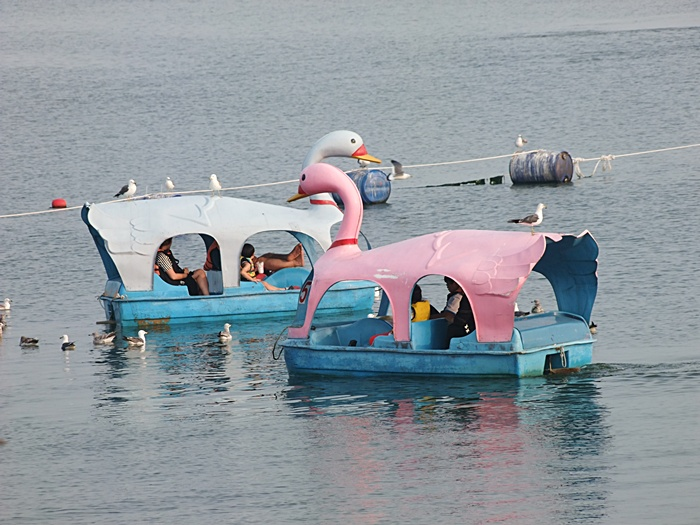 호수를 유유히 떠다니는 오리배의 모습
