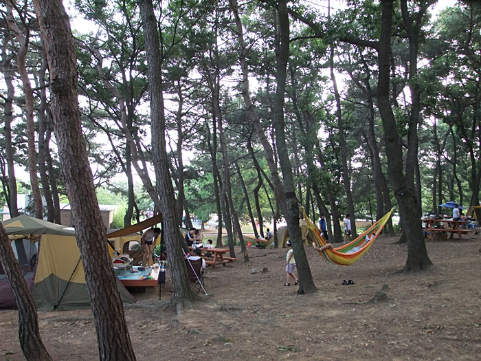 평택호에 자리한 야산에서 캠핑을 즐기고 있는 사람들