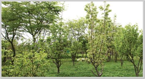 하남 나무고아원2