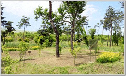 하남 나무고아원3