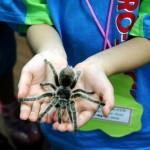 아이손에 올려진 커다란 검은 거미