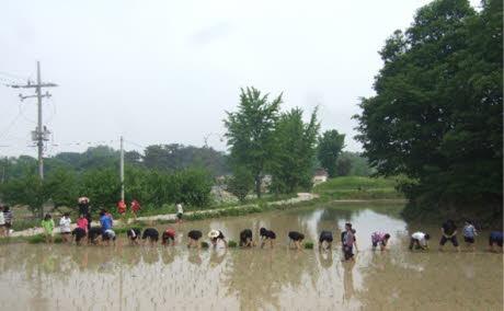 연미향마을 캠핑장
