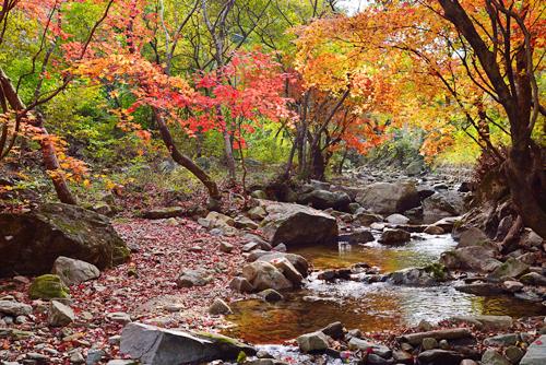 중미산자연휴양림1