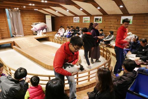 돼지나라 꿈동산의 이색 체험장 이천 돼지테마파크