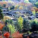 [문화예술] 한국민속촌과 백남준아트센터