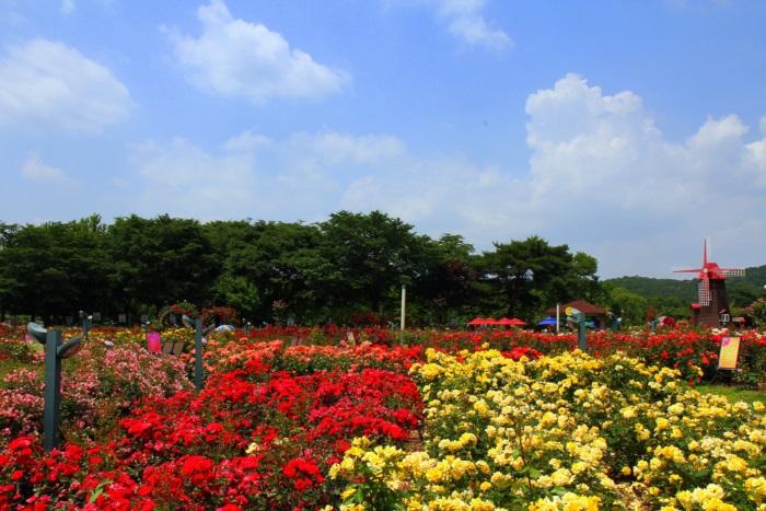 경기끼투어서울 대공원 장미원 867