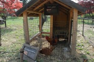 수목원 닭