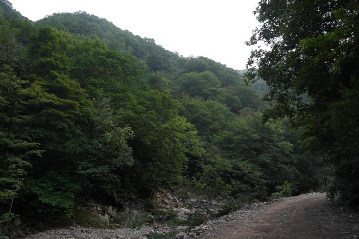 강씨봉 자연휴양림