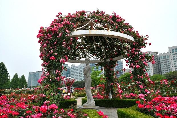고양 호수공원 장미원