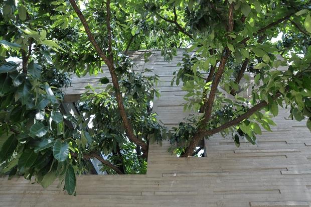 벽을 뚫고 나온 나뭇가지