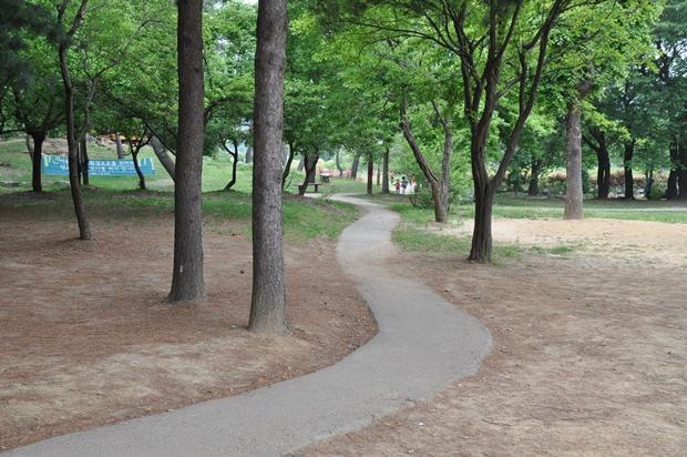 숲속 산책로