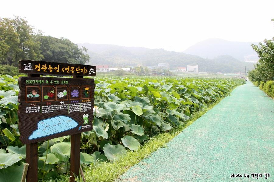 경기도 용인 가볼만한곳 - 용인농촌테마파크 경관농업단지