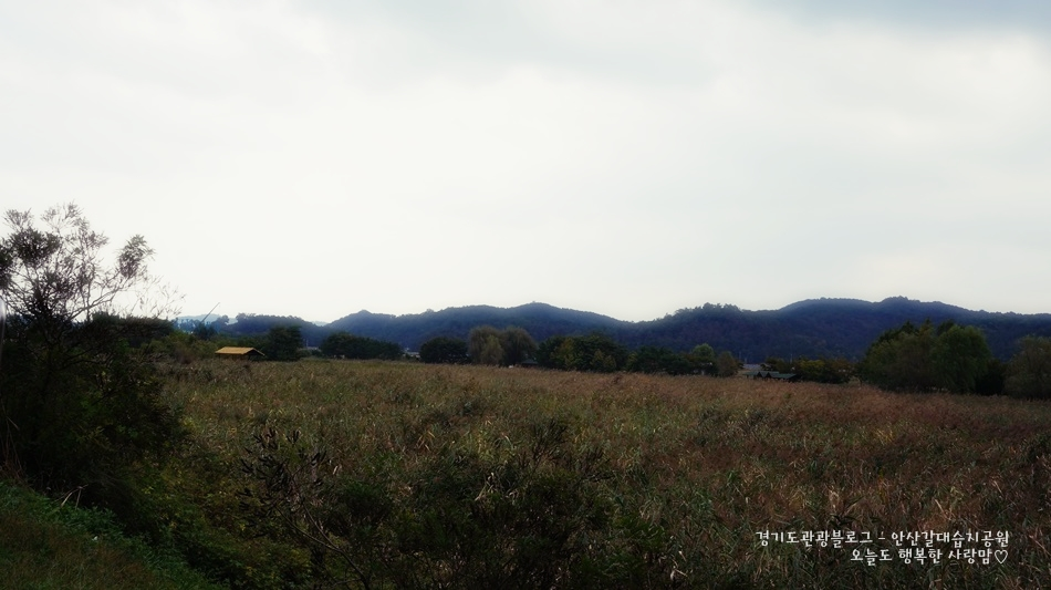 안산갈대습지공원 05