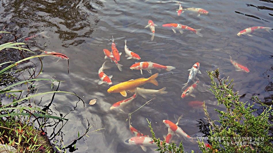 안산갈대습지공원 09